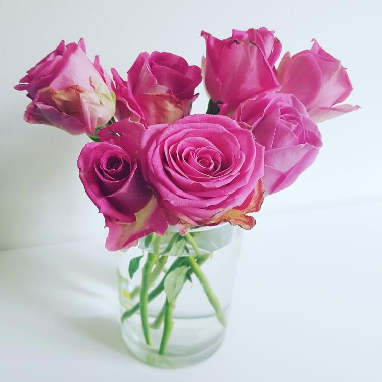 rosa roso