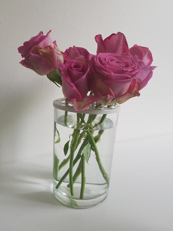 rosor rosa