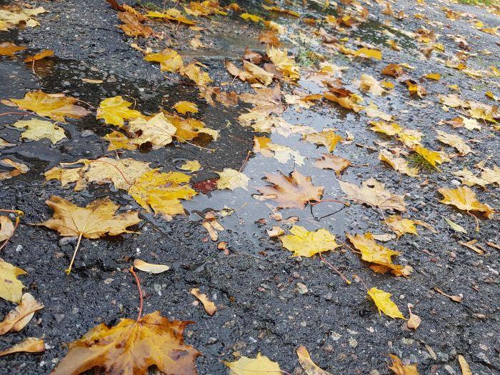 hösten1