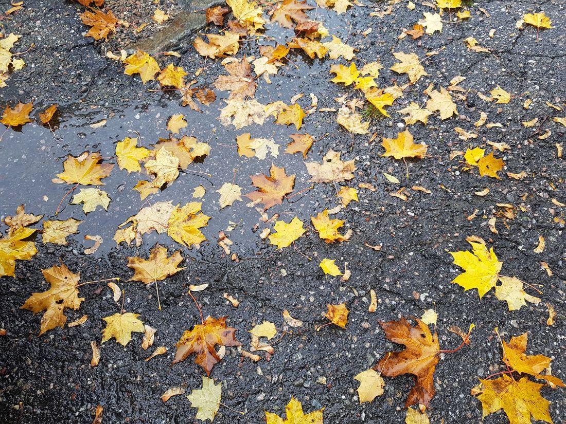 hösten2